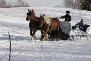 traineau à cheval